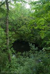 Leon Sinks (Rocks In Her Head) Tags: sink sinkholes leonsinks apalachicolanationalforest bigdismalsink