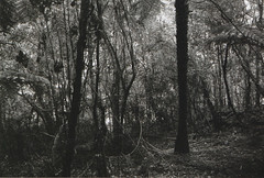 2 (KateysWorld) Tags: newzealand blackandwhite forest 35mm 35mmfilm 3200iso ilforddelta