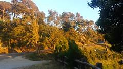 20160614_200301 (Thomas Larsen.) Tags: trees sunset italy alberi evening italia tramonto wind thomas sicily strong larsen sicilia forte vento sera