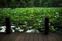 _12 (Taiwan's Riccardo) Tags: ltm color digital taiwan rangefinder botanicalgarden  l39  colorskopar 2016 28mmf35 sonyccd voigtlanderlens epsonrd1x