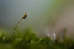 lone (jbardini@yahoo.com) Tags: wild plant macro green nature photo moss