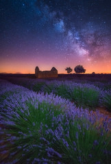 A Lavender Night (albert dros) Tags: travel flowers france castle night stars nightscape purple lavender galaxy astrophotography provence milkyway valensole albertdros