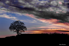 Brooding Sky at Dusk (Simon Downham) Tags: silhouette dusk mood moody dark sky color colorful night tree landscape nikon d700 smoke smokey fire onfire atmosphreic atmosphere brood brooding sunset 004k5x ellisfield hampshire england 004m3x low light