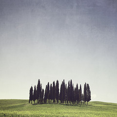 Tuscan Copse (MaggyMorrissey) Tags: blue italy tree green forest tuscany copse