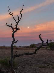 20130624_Namibia_Desert_Rhino_Camp_0336.jpg (Bill Popik) Tags: africa namibia 2places