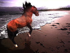 Le ct sauvage (Philmon Shivar) Tags: sea horse mer cheval plage sauvage