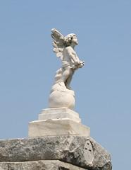 Signorelli angel