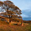 Autumn Light (Kev Palmer) Tags: autumn light england sky landscape lowlight nikon seasons farm farming ruin shade staffordshire ruraldecay gbr theroaches benbo staffordshirewildlifetrust benbotripod threeshiresphotographers staffordshiremoolands d800e nikond800e