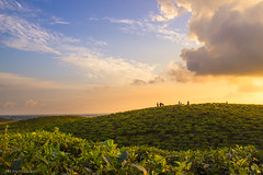 The Tea Garden with Full of Beauty (s.r.shemul) Tags: blue sky sun nature beauty set garden photography colorful raw tea hill dream curve shape tone