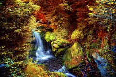 Les Fonts del Llobregat (iban_g_g) Tags: wood color colour water waterfall agua nikon catalonia bosque catalunya aigua catalua cascada bosc llobregat castellardenhug d7100 ibangonzlezphotography