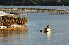 "meu 237° barco... isso deve ser mesmo ""paixão""!!!!! rs (Ruby Ferreira ®) Tags: bay boat bait florianópolissc brasilemimagens reflexosreflection"