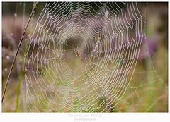 spider web (Den Boma Files) Tags: morning light white color detail macro green texture net halloween nature wet water thread closeup insect design spider colorful pattern shine natural background web spiderweb silk nobody nopeople drop cobweb dew species network trap raindrop