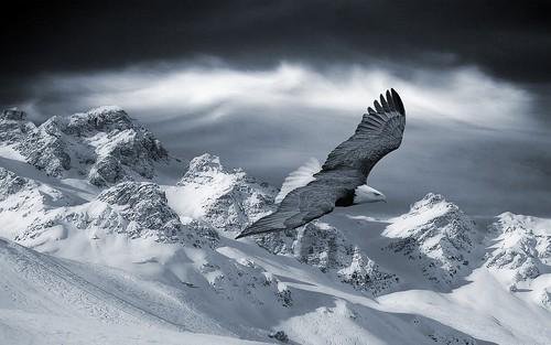 eaglesnow5