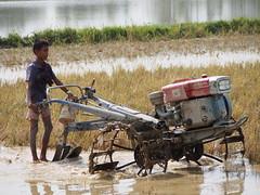 MMR 2013-III (mgummert) Tags: children myanmar childlabor handtractor