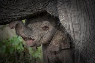 Botswana Okavango Delta Photo Safari 32