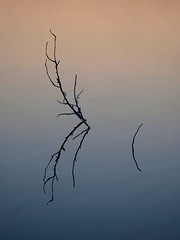 Reflets au soleil levant ****-+°°°-° (Titole) Tags: reflection branches water nicolefaton titole simplicity thechallengefactory friendlychallenges twothumbsup storybookttwwinner herowinner challengegamewinner 15challengeswinner challengeyouwinner