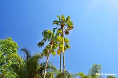 Palms (mswan777) Tags: park travel trees vacation sky color nature landscape orlando nikon d70 florida palm polarizer seaworld circular