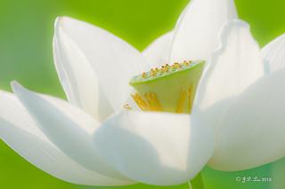 DSC06291-3 夏日最美莲花芯 Beauty of Lotus Heart