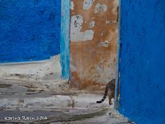 gone (karina robin travel photography) Tags: street blue cats robin cat chats chat bleu morocco maroc blau rue katzen marokko karina rabat kasbah oudayas strase kasbahdesoudayas