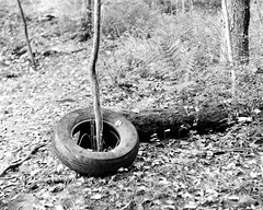 Old Tire (Matt0513) Tags: park camera old trees film overgrown leaves forest log woods view pennsylvania north large delta tire rubber pollution western 4x5 format 100 ilford