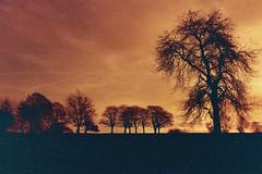 Sunset at Roundhay Park (Federico Raviele) Tags: park uk sunset film lomography leeds xr roundhay redscale