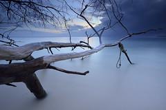 Arbres morts #1 [ Île de Praslin ~ Seychelles ] (emvri85) Tags: longexposure beach zeiss seychelles bluehour plage bois praslin 075 grandeanse leefilters d800e