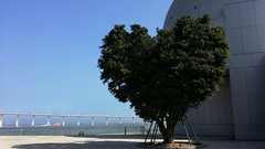 Happy Valentine's day (Rosanna Leung) Tags: blue sky people tree day valentines macau heartshape