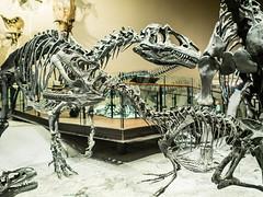 Utah Museum of Natural History (Puffer Photography) Tags: utah saltlakecity 2014 utahmuseumofnaturalhistory