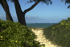 Serene pathway (kewzoo) Tags: ocean trees beach hawaii oahu path sandy tropical idyllic