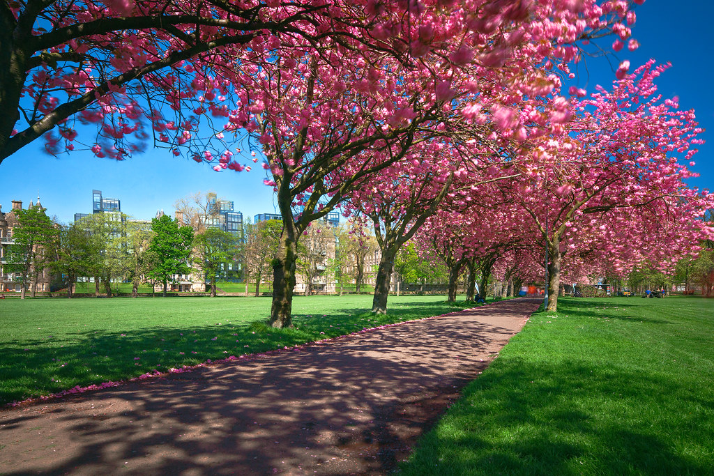 value 9 cherry tree park edinburgh the world s best photos of marchmont and scotland flickr hive mind