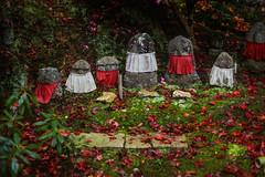 Jikishi-an/直指庵 (Photo_nori) Tags: autumn fall leaves japan garden landscape temple moss kyoto buddha buddhism 日本 紅葉 京都市 京都府 jikishian 直指庵