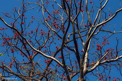 Welcome spring (Sougata2013) Tags: india flower tree nature colors spring nikon mandi himachalpradesh nikond3200 raktamandar
