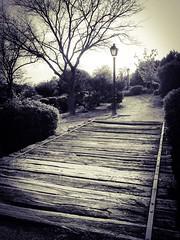 Puente en Monterozas (jmlopezto) Tags: park wood bridge parque bw blancoynegro puente madera farolas
