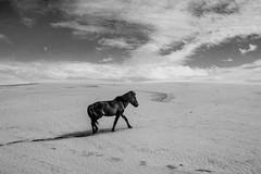 sand horse (WegZ Photography) Tags: horse sand dune muine vitnam