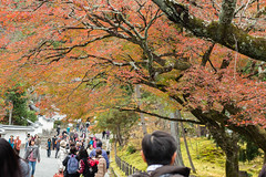 BM7Q2492.jpg (Idiot frog) Tags: autumn red color green fall leaves yellow japan season maple kyoto seasonal nanzenji