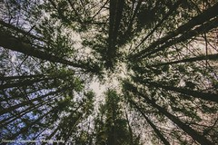look to the sky... (stavros karamanis) Tags: sky plant tree nature canon heaven outdoor ngc tokina f28 t3i naturephotography 1116mm dxii