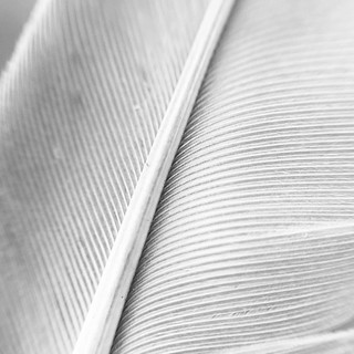 Feather 02. #photojojomacro
