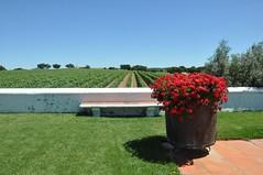(As minhas andanas) Tags: portugal vineyards alentejo estremoz