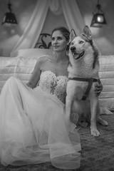 20160613_172334_RS-Blur-B&W-Portrait.jpg (FotoKreator Robert Szczchor) Tags: spring husky pies inside wiosna morda villatoscana murzasichle fotokreator dziedzinacelina wwwfotokreatoreu