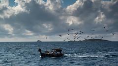 Attir par le poisson (baptistedavid1) Tags: poisson boat mouette oiseau bird seagull fish pcher filet mer corse nuage