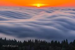 Silky Sunset via Mount Tamalpais... (markarlilly) Tags: california sunset fog zeiss marin marincounty tamalpais mounttam mounttamalpais mounttamalpaisstatepark californiastateparks zeiss135mm sonnar1352zf