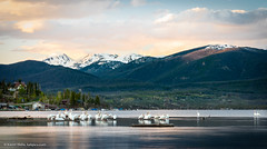 Pelicans on Shadow Mountain Lake at sunset (Vironevaeh) Tags: longexposure sunset mountain lake mountains west pelicans nature water birds outdoors scenery colorado scenic americanwest theamericanwest thewest shadowmountainlake