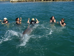 Swimming with the Dophins, Grand Cayman