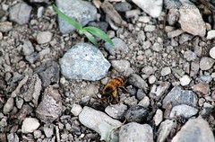 Little bee (KARLINHOS18) Tags: animal animals yellow canon insect photography rebel photo flickr foto stripes bee animales fotografia flick animalia insecto eosrebelt3 canoneosrebelt3 canoneosrebel1100d eosrebel1100d carloscolmenarezphotography
