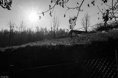controluce in rete (Clay Bass) Tags: trees bw sun green backlight rural grid canon5d rays 24105 saluzzo