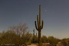 It's a dark night (Thomas Frejek) Tags: arizona usa us saguaro ajo 2016 carnegieagigantea organpipecactusnationalmonument riesenkaktus