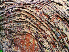 The Jackson Pollock rock - Layered rock colonized by moss and lichen of different kinds. (igrusan) Tags: abstract texture nature rock stone moss jackson pollock