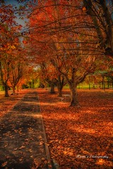 Winter_0109 (Manni750) Tags: trees winter sun rural bush australia nsw warren leafs