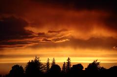 Arkell Sky (peterkelly) Tags: trees sunset orange ontario canada clouds digital canon evening dusk northamerica 6d arkell