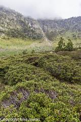 Coms Vell, Principat d'Andorra (kike.matas) Tags: canoneos6d kikematas canonef1635f28liiusm riudelcomsvell ordino andorra andorre principatdandorra pirineos paisaje vegetacion montaas nature canon lightroom4